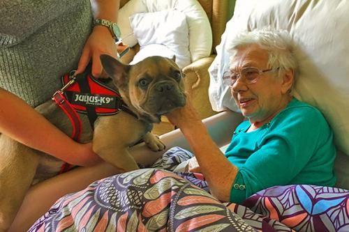 pet therapy dog with resident